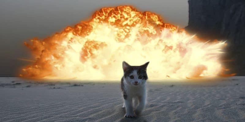 kitten walking away from explosion