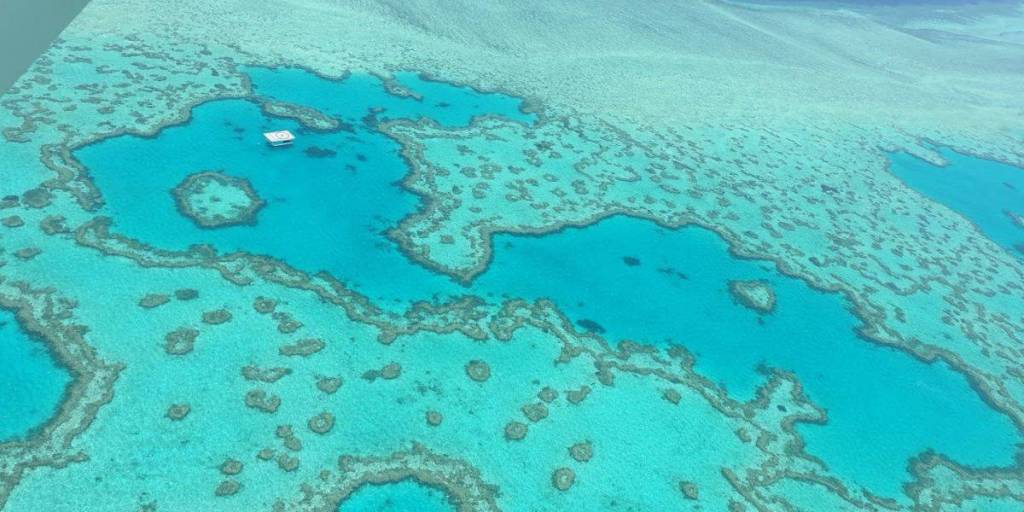 The Great Barrier Reef Is Shrinking… It's Time to Act