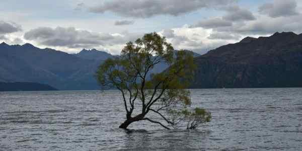 that wanaka tree new zealand
