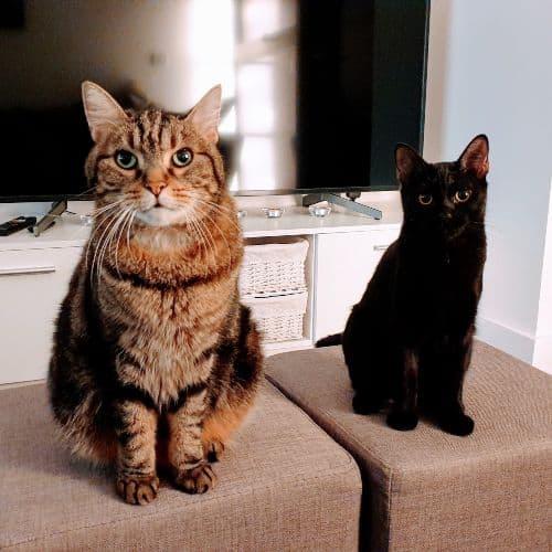 miko and luna
