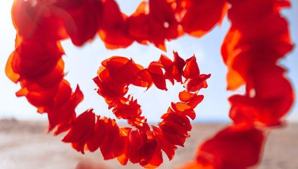 Flower petals heart shape