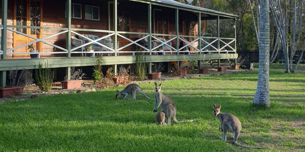 australia 1770 kangaroos