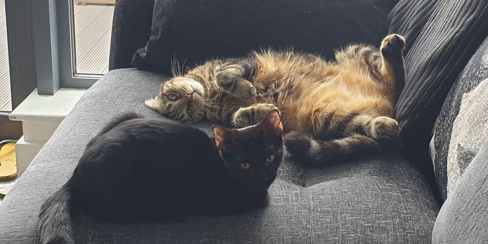 miko and luna on the sofa