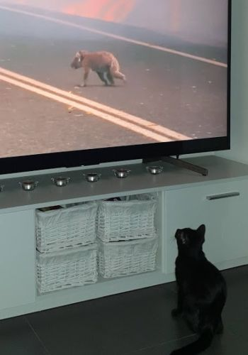 luna in front of extinctions bbc documentary