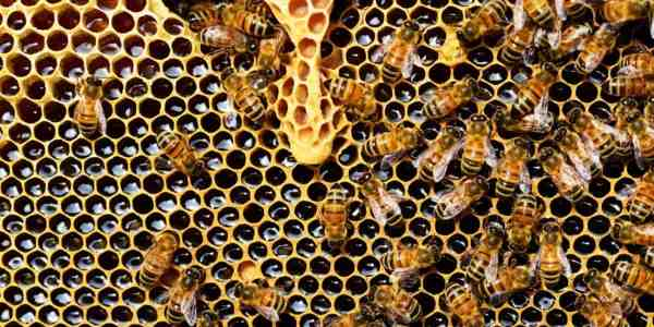 Honey: Health Benefits vs Negative Impact on Our Eco-System